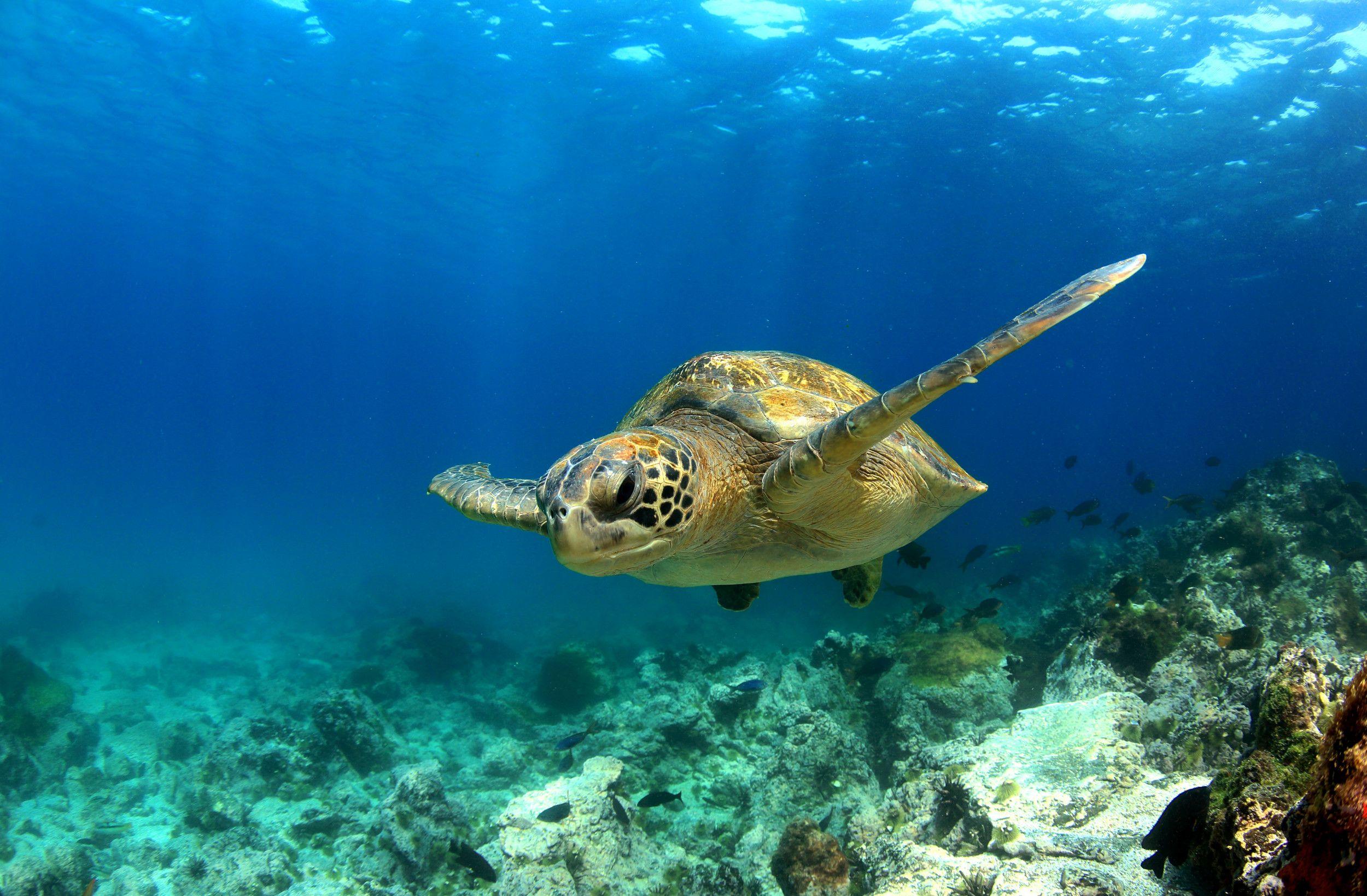 Bedeutung von Meeresschildkröten für den Menschen