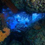Brief Information About Deep Sea Animals